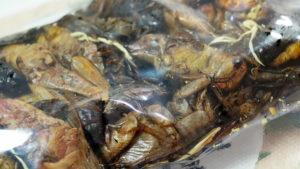 concours insecteo insectes comestibles c'est bien d'être bien cbdb