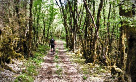 Angélus Trail 2019