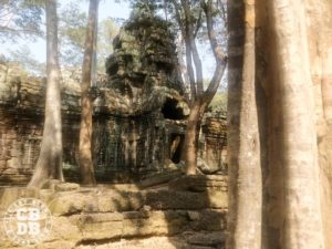 ultra trail d'angkor 2020 running cambodge